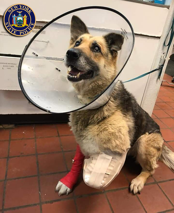 Police: Chained and abused dog chewed off her own paw