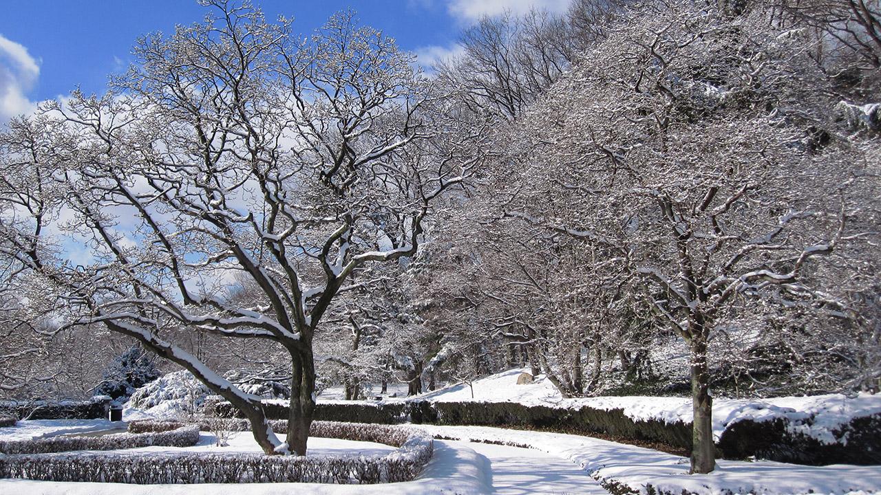 Brooklyn Botanic Garden is free on winter weekdays